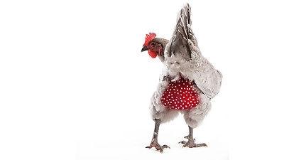 Chicken Nappy Small